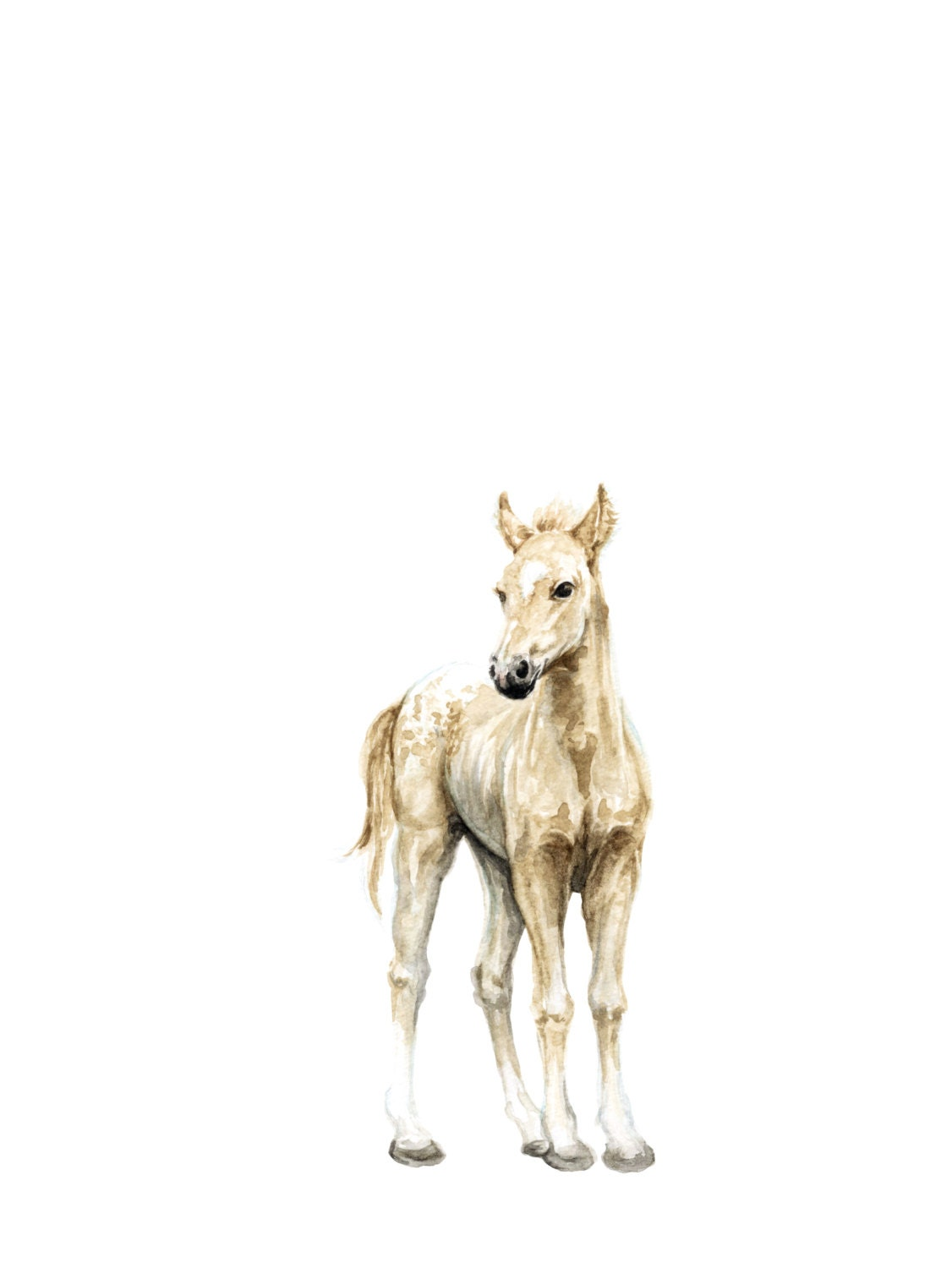 horse watercolor print baby animal painting colt painting