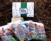 Postcard Gift Set, Birds, DESERT WINGS, (4) Handmade Postcards, Portrait A edition, Choose 4x6 or 5x7