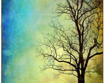 Tree photography, Nature Photo print,  wall decor, large poster,blue yellow green, sunset time photo, nature photography