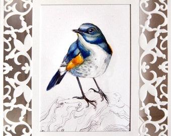 Himalayan Bluetail - Original framed watercolour