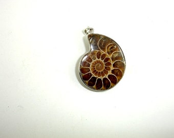 Ammonite Pendant, Fossil Pendant,  with Silver Tone Base Metal Bail, Size from 26 x34 mm to 32 x 38 mm, 1 piece (108049001)