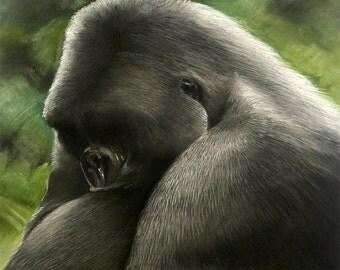Silverback | original painting | pastel | soft pastel | chalk pastel | gorilla | ape | | wildlife | wildlife art | animal | Tracy Butler