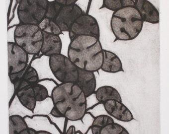 Honesty, Money Plant, original mezzotint print