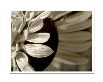 Sepia Photography Floral Sunflower Macro Flower Photograph Art Print