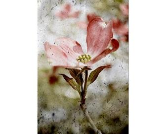 Floral Photography Print Dogwood Flower Fine Art Decor