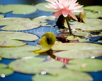 Lily Pad Flower Print