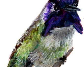Purple Costa Hummingbird, Miniature, SFA