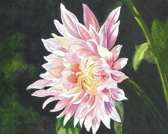 Pink Chrysanthemum Blossoms Floral Art Watercolor Painting