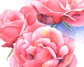 Pink Roses print of watercolor painting R3315 - 5 by 7 size smallest print