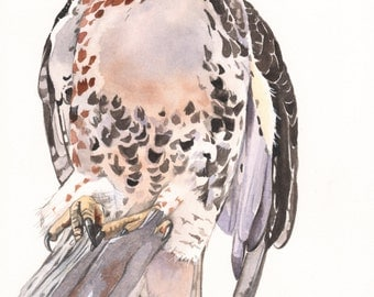 Red Tailed Hawk Original watercolor painting