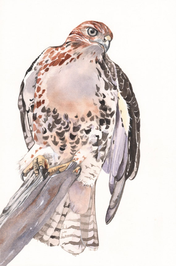 Hawk painting watercolor - photo#7