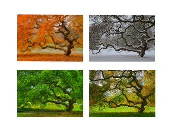 5X7 Print Set Japanese Maple Tree in Four Seasons Landscape Photography Tree of Life Autumn Winter Spring Summer Zen Home Decor  Wall Art