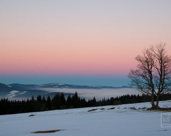 Winter sunrise, Candy sky, Winter photography, Pink and baby Blue, Lonely tree, Snow countryside, Nature photography, Pastel colors print