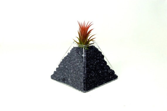 LIMITED EDITION! ***Volcanic Eruption Air Plant Terrarium*** -- Air Plant Glass Pyramid Planter, Glass Volcano Decoration, Volcano Decor