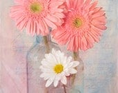 The Daisies, Fine Art Photography, Flower Photography, Still Life Photography, Botanical Photography