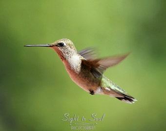 Bird Photography, green hummingbird art, bird lover gifts under 25, nature photography, rustic decor, fine art print, flying bird wall art