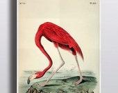 Antique 1800s Flamingo Print Pink Flamingo Art Flamingo Decor Bird Prints Illustration Art Prints Summer Decor Home Decor