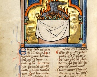 "Bestiary Illumination : ""A Phoenix"" (c1270) - Giclee Fine Art Print"