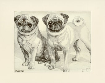 """Matted Vintage Dog Print """"Pug"""" by Nina Scott Langley from Hutchinson's Dog Encyclopedia C. 1934 Matted 11x14"""""""