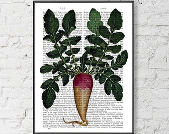 Turnip Print - botanical print kitchen print kitchen decor dining room decor food print gift for chef gift for cook kitchen art food art