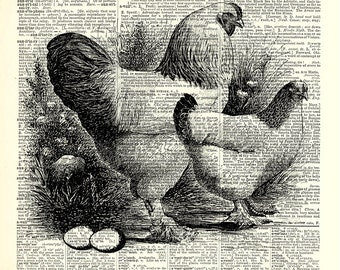 Farm Fresh Eggs, Chicken kitchen art print. Dictionary page art print. Print on book page.