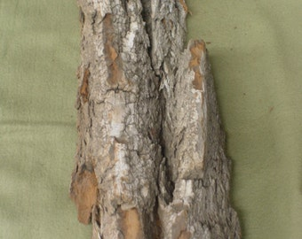 XL Piece Cottonwood Bark, perfect for carving, crafts or decor. CB10