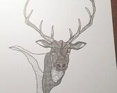 custom order elk illustration on bristol paper