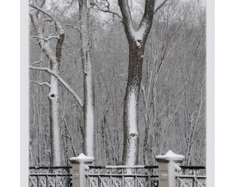 Bridge by the Woods, Forest Park