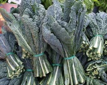 Black (Lacinato, Dinosaur) Kale Seeds- 400+