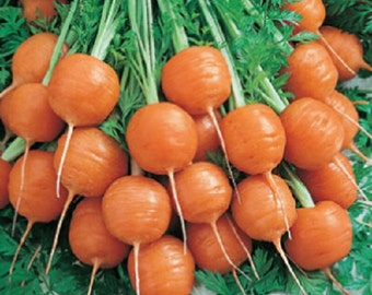 300 Parisian Carrot Seeds Vegetable Seeds