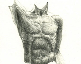 Male Muscle Drawing