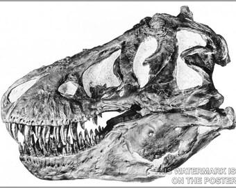 24x36 Poster; Tyrannosaurus Rex Skull