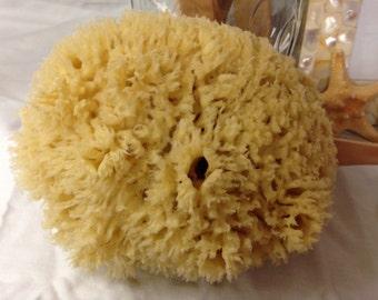 Natural Sea Wool Sponge 5-6 inches-Bathing sponge