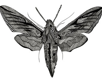 A3 Moth Screenprint