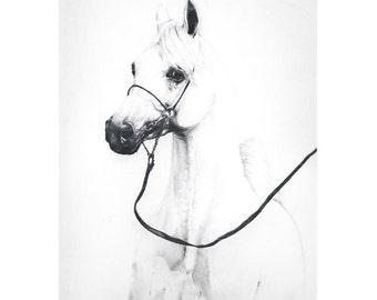 Popular items for disegno a matita cavallo on etsy for Cavallo disegno a matita