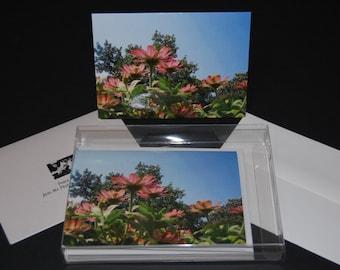 Blank photo greeting card (box of 10)
