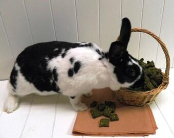 Bunny Bliss.  A delicious rabbit treat featuring tasty organic cilantro, a bunny favorite!