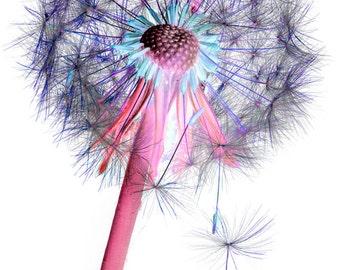 Plant Extract - Dandelion clock.