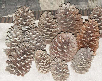 PINE CONES (1 Dozen),100% Natural for Crafts,Baskets,Bird Feeders,Decor,Gifts,Holiday Decorations,Mixed Sizes Large,Med,Small*USA Seller*