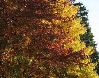 Photograph Autumn  5x7 matted, 8x10 matted