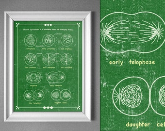 Mitosis Cell Division Green Biology Textbook Science Artwork Laboratory Poster Educational Art Retro Design 8x10 9x12 11x14 16x20 18x24