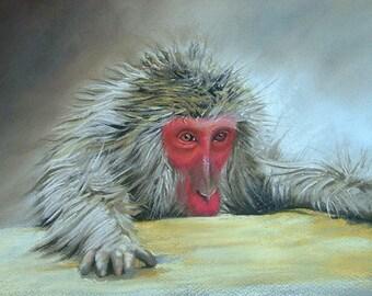 Hot Tub Monkey | original painting | pastel | soft pastel | chalk pastel | monkey | macaque | wildlife | animal | Tracy Butler
