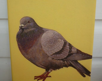 Limited Edition Print of pigeon, bird print, on canvas