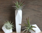 Collection of 3 Faceted Porcelain Air Plant Holders -Plants Included-