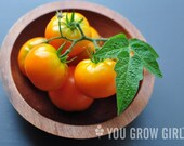 Goldilox RARE Dwarf Orange Organic Tomato