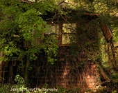 Abandoned house photography. rustic NC Mountain art Lush green overgrowth Nature woodland Earthy wall art 8x10 matted to 11x14, 11x14 16x20