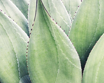 Botanical photography print agave leaves sage green desert style wall art - Agave Texture