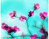 Spring blossom, 4x4, Original signed, Fineart photograph, Floral decor, Home decor, blue decor, spring
