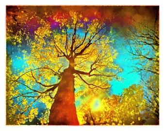 Art, Night sky, 8x10, Art, photography, nature, Fine Art photograph, Fall decor, tree art, red decor, autumn decor, color photography