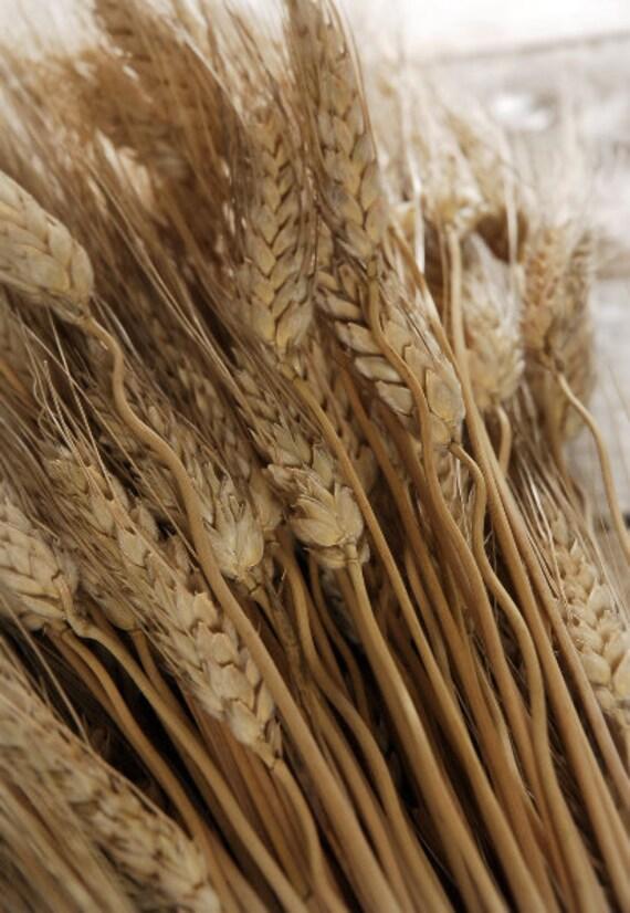 Dried Wheat Stalks Wheat Bundle 1 lb Wreath Wheat DIY Wedding